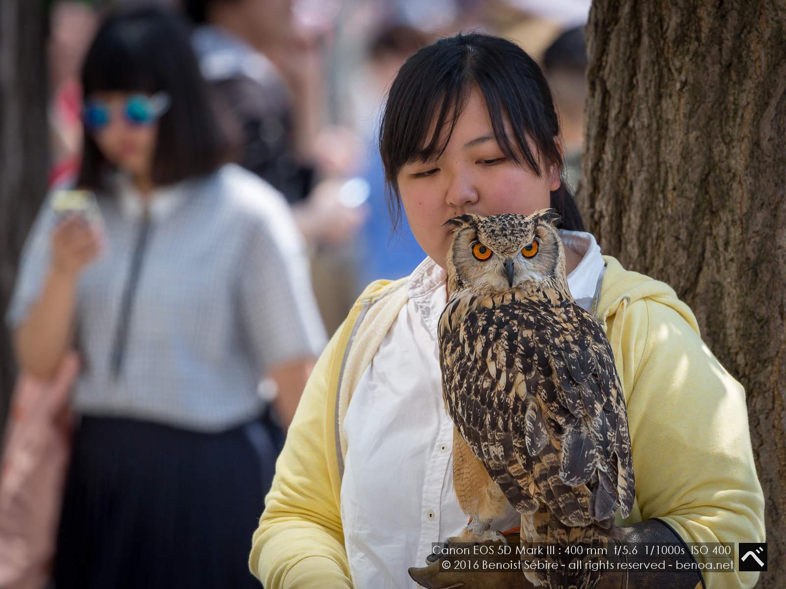 Harajuku Owl