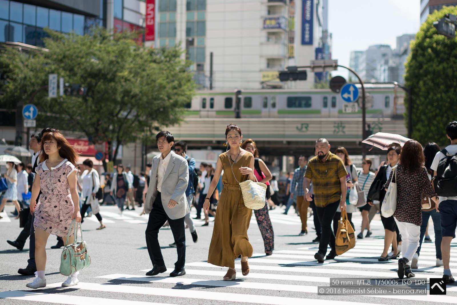 Shibuya Summer