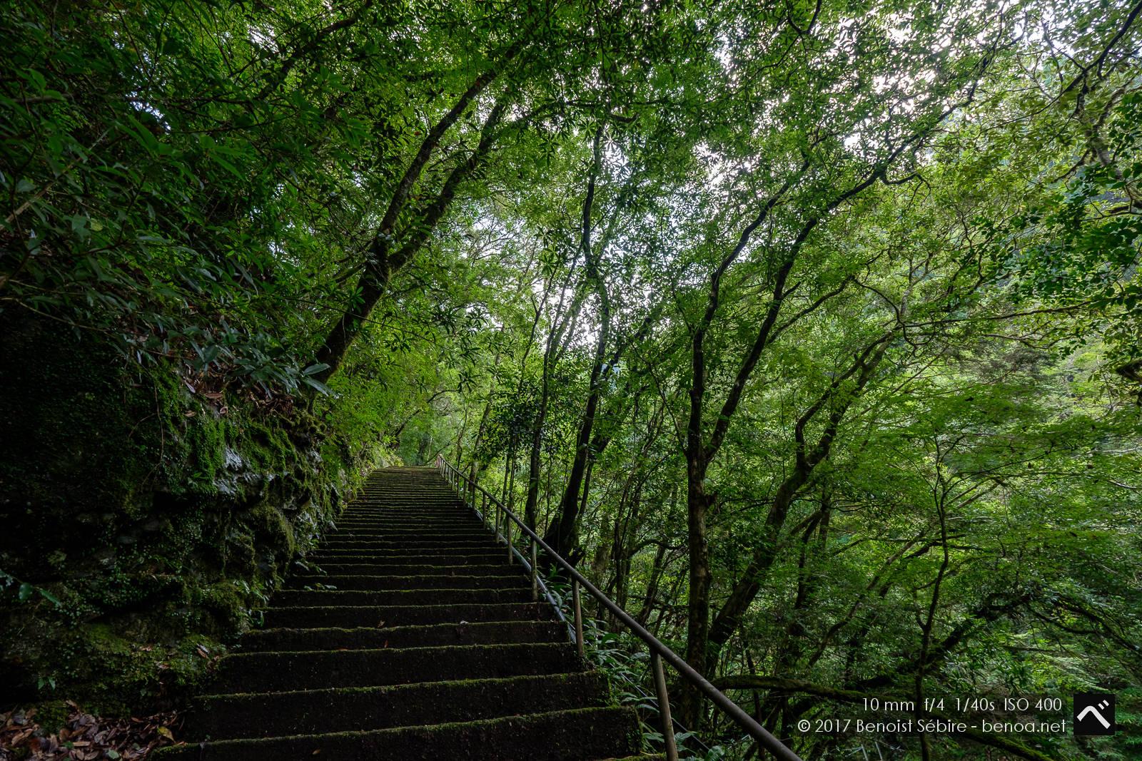 Shikoku Forest