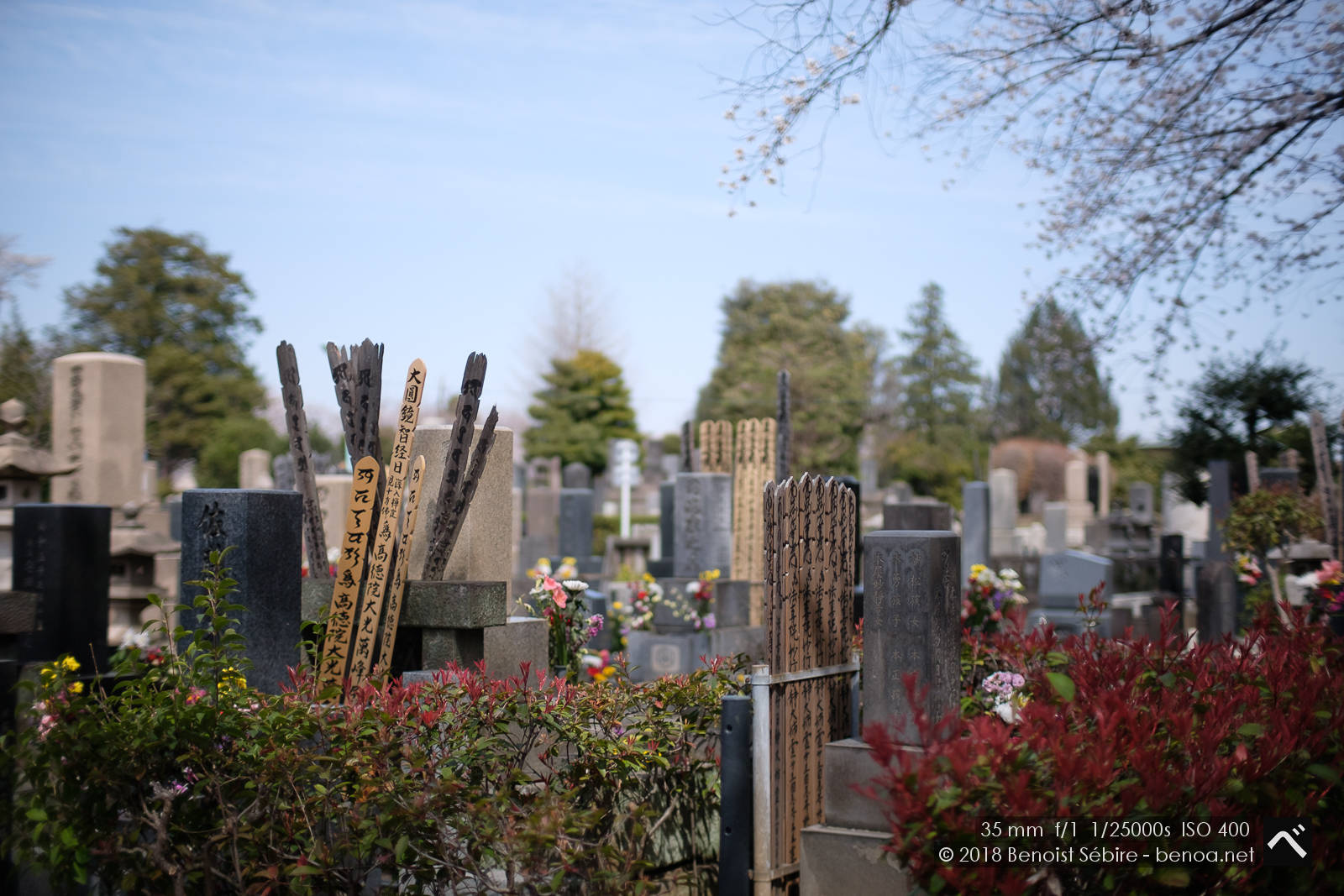 Cemetery Hanami