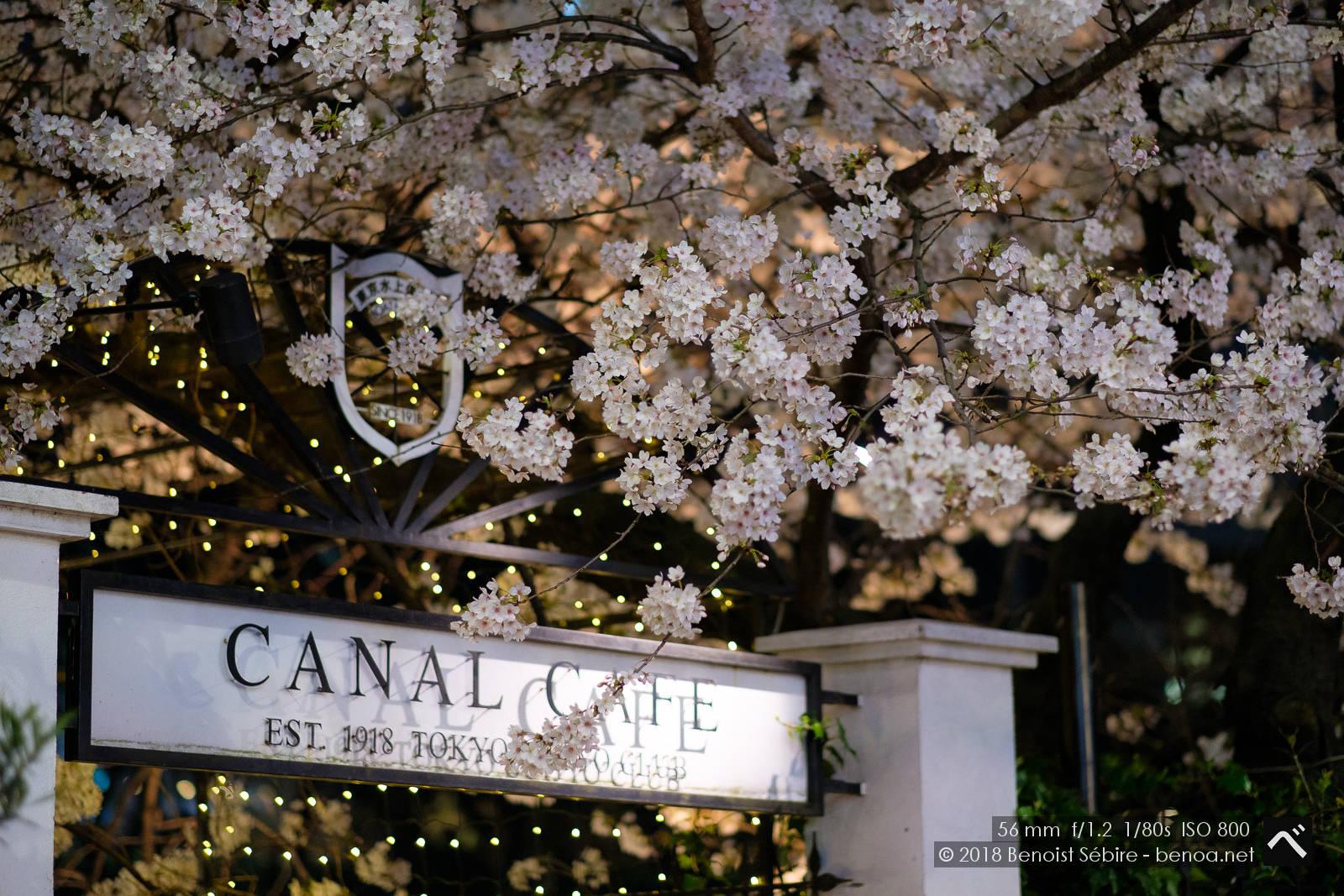 Iidabashi Blossoms
