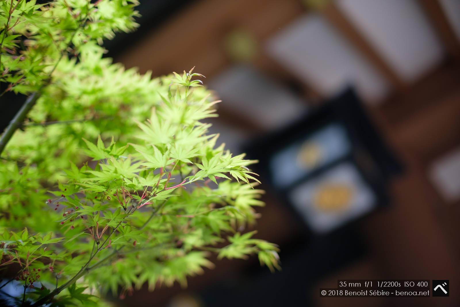 Temple Leaves-01