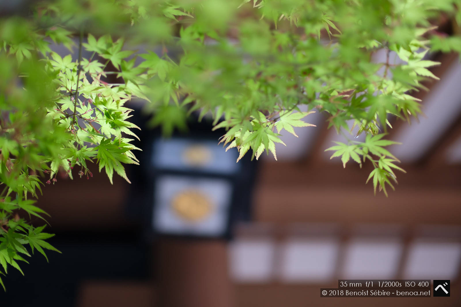 Temple Leaves-02